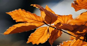 Autumn-leaves-sceenario